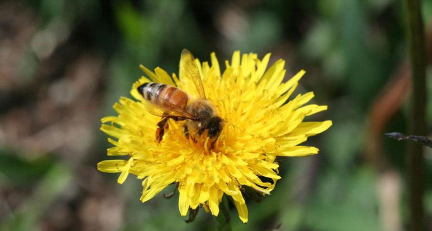 Bees take longer to learn floral odors polluted by vehicle fumes
